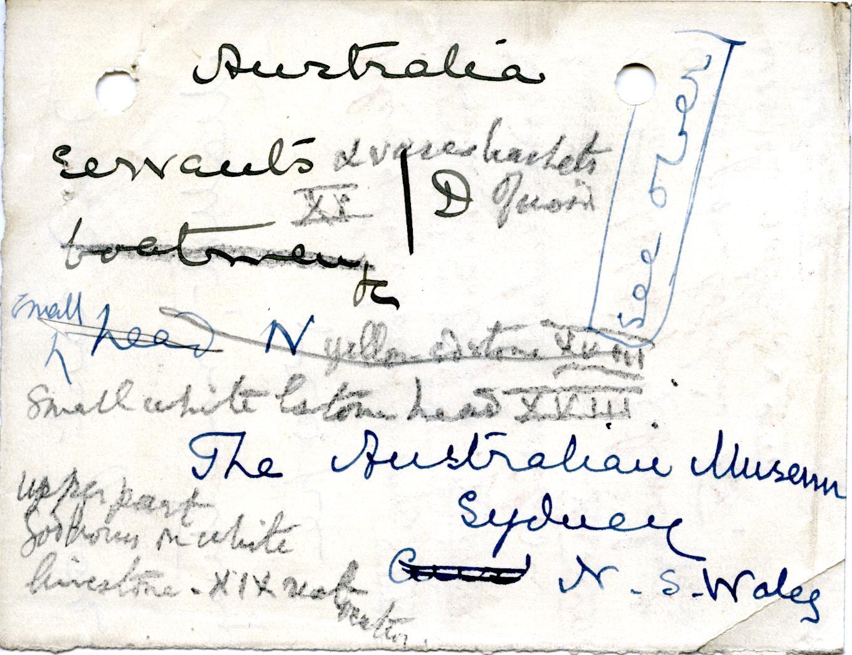 1906-07 Deir el-Bahri, Oxyrhynchus, Ihnasya DIST.28.04i