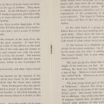 1909-10 Meidum, Memphis Exhibition catalogue PMA/WFP1/D/18/16.5